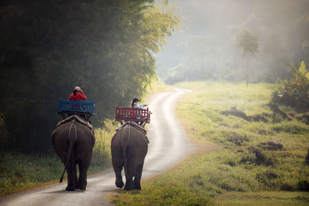 Elephant trekking through jungle in northern Laos Stock Photo
