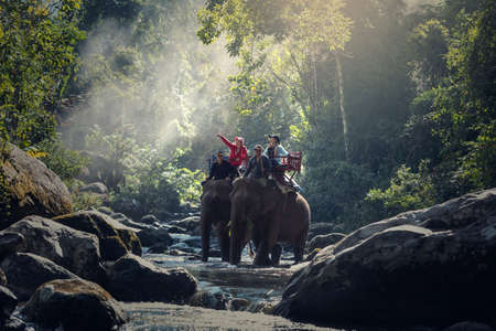 Elephant trekking through jungle in northern Laos 스톡 콘텐츠