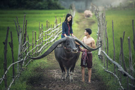 Couple farmer in farmer suit with buffalo on rice fields Zdjęcie Seryjne