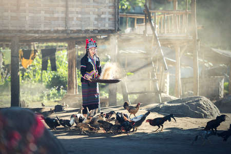Asian girls feeding chickens at Laos countryside Imagens