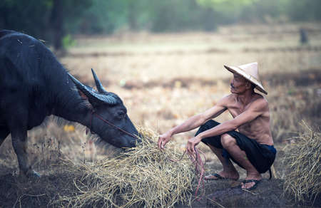 Asian farmer and water buffalo in farm