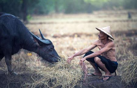 Aziatische boer en waterbuffels in landbouwbedrijf Stockfoto - 76111106