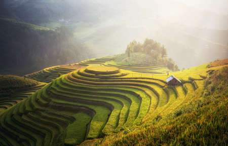 Rice fields on terraced of Mu Cang Chai, YenBai, Vietnam. Vietnam landscapes. Zdjęcie Seryjne