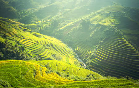 Rice fields on terraced of Mu Cang Chai, YenBai, Vietnam. Rice fields prepare the harvest at Northwest Vietnam. Vietnam landscapes. Zdjęcie Seryjne