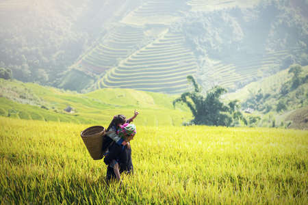 Mother and Daughter Hmong, working at Vietnam Rice fields on terraced in rainy season at Mu cang chai, Vietnam. Rice fields prepare for transplant at Northwest Vietnam