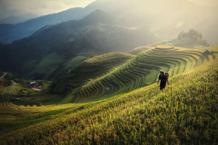 Rice fields on terraced of Mu Cang Chai, YenBai, Rice fields prepare the harvest at Northwest Vietnam.Vietnam landscapes.