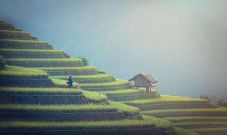 Green Rice fields on terraced in Muchangchai, Vietnam Rice fields prepare the harvest at Northwest Vietnam 写真素材