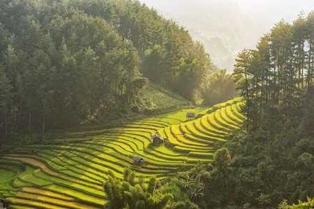 HUT; Rice fields on terraced of Mu Cang Chai, YenBai, Vietnam. Vietnam landscapes.