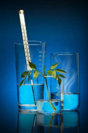 the plant is artificial grown up in laboratory. modern technologies in a science and medicine. photo