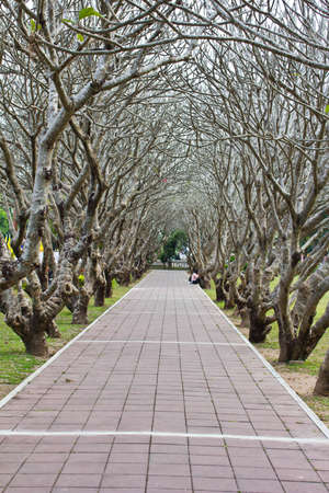 tunel: Tunnel tree thailand