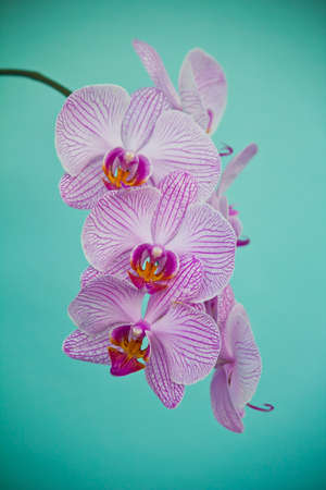 Purple Orchid Flower photo