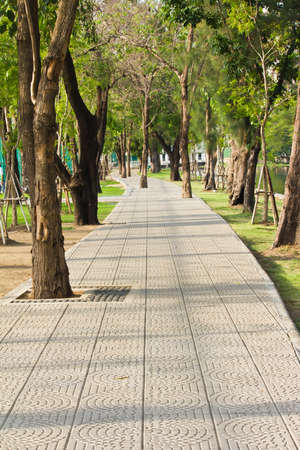 Green alley,path in the park  photo