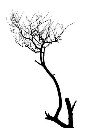 withered: Silhouette of dead tree without leaves
