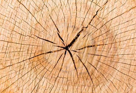 tree stump background  photo