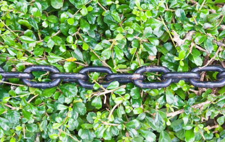 Black chain on autumn leaves background Stock Photo - 14220090