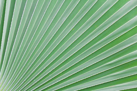 Palm Leaf radius for web page or background photo