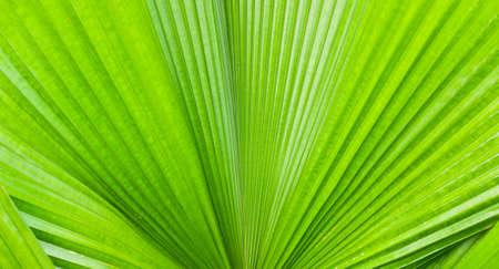 Closeup of palm tree leaf  photo