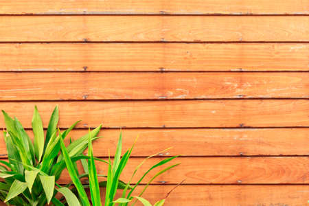 Wooden wall Stock Photo - 17687625