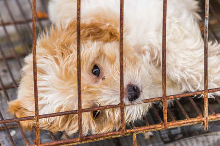 lonely dog in cage  photo