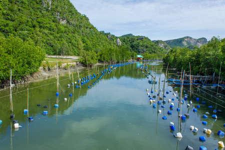 fish rearing: small shrimp farm and fishing village in Khao Sam Roi Yot