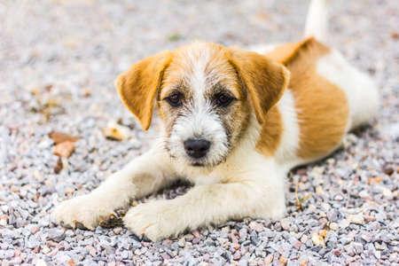 puppy love: Puppy love  Stock Photo