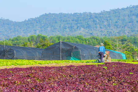 Converting agricultural land to grow vegetables in Thailand