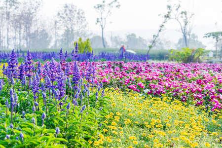 Colourful Flower in Formal Garden photo
