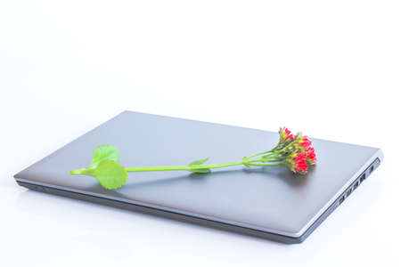 Flower on a laptop  Isolated render on a white background photo