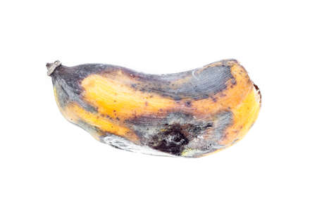 bad banana: Brown Over Ripe Banana isolated against white background