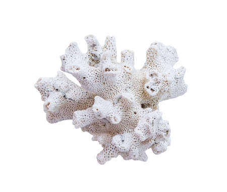 bleaching: coral bleaching on white background