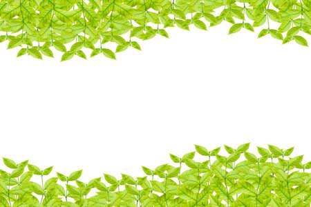 leaves frame: Green leaves frame isolated on white background Foto de archivo