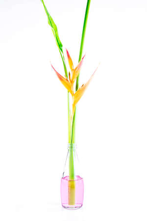 heliconia: Beautiful Heliconia flower blooming on isolate white background.