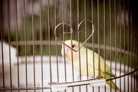 confined: bird in cage, The confined animal torture.