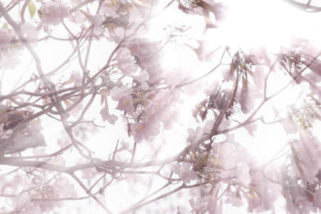 ambush: Flowers at the top of the tree with the sun ambush. Stock Photo