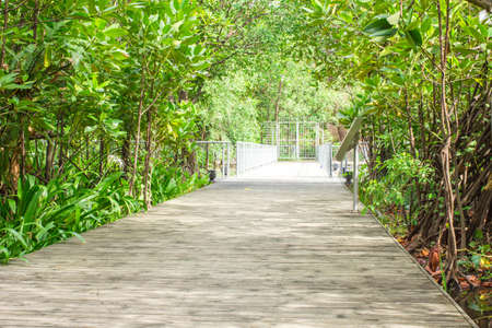 View of a walkway in a green park