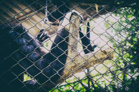 monkey was trapped in a zoo.