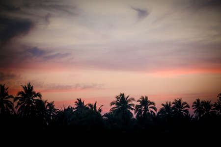 Silhouette of palm trees at sunset Stock Photo