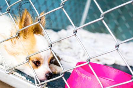 orphaned: closeup chihuahua of a dog cage Stock Photo