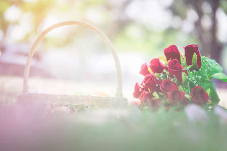 Rose Flower, Valentines Day concept Stock Photo