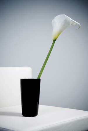 r fine: Close-up of calla lily on white background