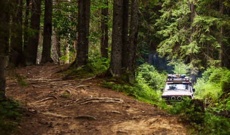 thickets: SUV sneaks off-road through the thickets in the woods