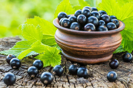 black currants: Black currants in a bowl