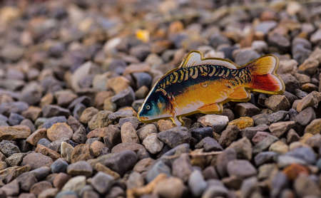 catch carp on baits