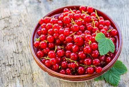 Red currant on a plate on background of green garden.