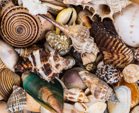 Seashell background, lots of different seashells piled together