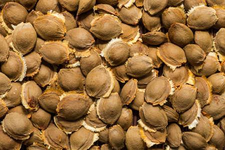 Dried apricot kernel, close up as background Фото со стока