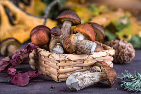 Mushroom Boletus in wooden wicker basket. Boletus edulis over Wood Background, close up on rustic table.  Cooking delicious organic mushroom. Gourmet food,Autumn Cep Mushrooms. Mushrooms Picking Reklamní fotografie