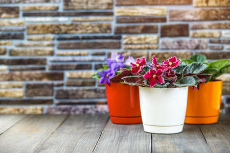 Three Blooming bright pink African violet flower on wooden table with stone background and copy space,African violets (Saintpaulia) Foto de archivo - 137897021