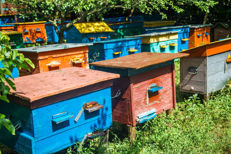 A beehive from a tree stands on an apiary. The houses of the bees are placed on the green grass. Private enterprise for beekeeping. Honey healthy food products.Wooden beehive.