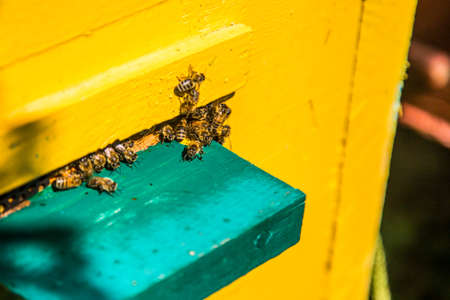 Hives in an apiary with bees flying to the landing boards in a green garden.The bees return to the beehive after the honeyflow.Honey healthy food products.